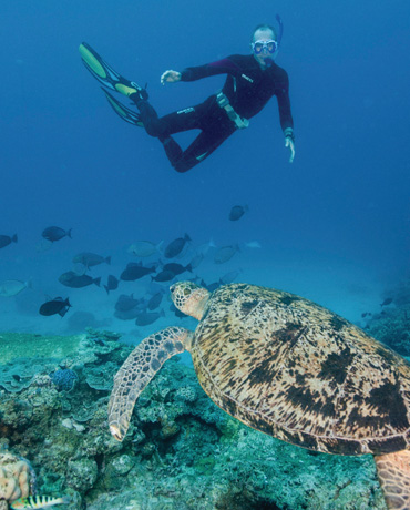 Snorkelling and Diving in Queensland